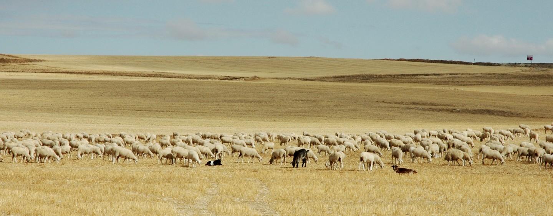 Turismo de Pastoreo